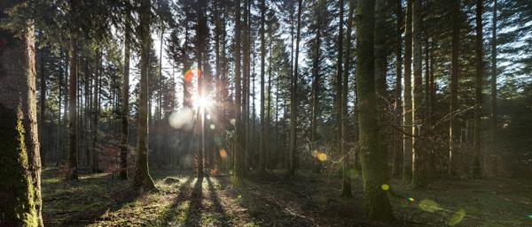 Grande forêt verdoyante baignée de soleil