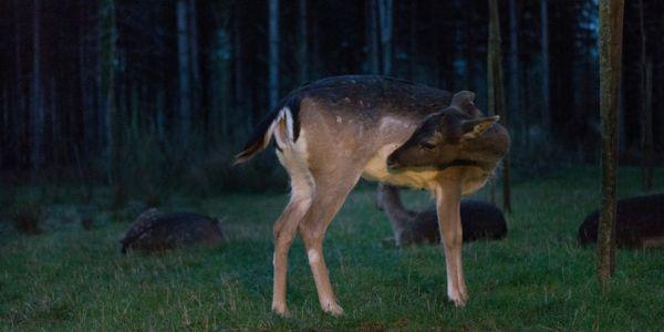 Info ou Intox : Y a-t-il vraiment des animaux en liberté à Center Parcs ?