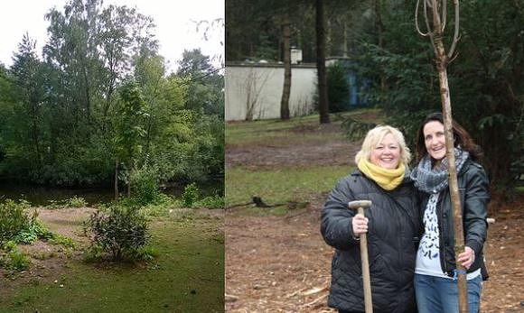 L'arbre de l'amitié du parc De Kempervennen