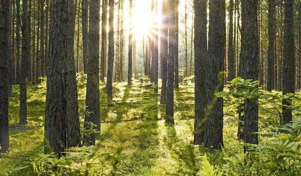 Park Allgäu: Niet alleen bouwen, maar ook planten!