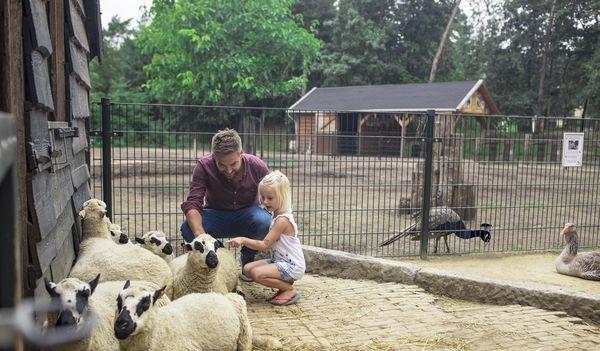 Nieuwe activiteiten in Limburgse Peel