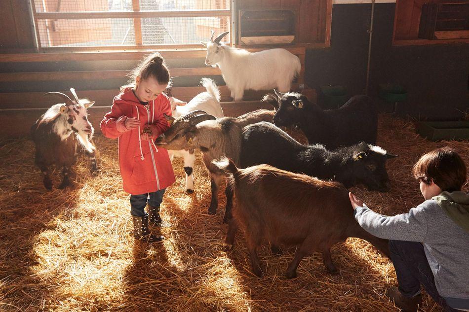Kinderboerderij Limburgse Peel