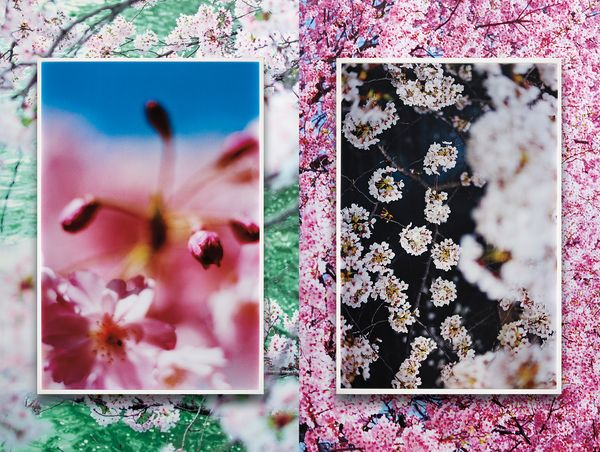 In a special interview between artist Mika Ninagawa and Yuka Yamaji, Co-Head of Photographs, Europe, we are invited into Ninagawa's distinctive world of vivid colors and dense imagery.
