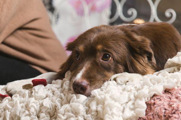 Kuka korvaa koiran tai kissan aiheuttaman vahingon vuokra-asunnossa | SATO