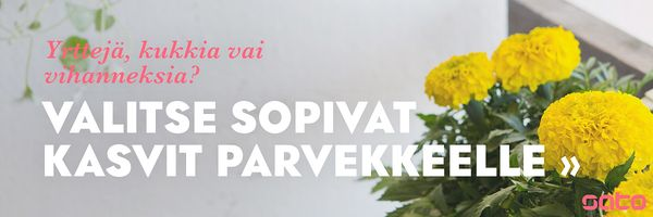 Miten saat parvekkeen kukoistamaan ja valitset oikeat kasvit | SATO