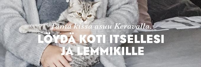 SATO VuokraKoti - myös vilukissoille!