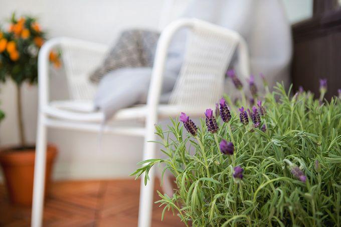Avoparvekkeella viihtyvät monenlaiset kasvit | SATO