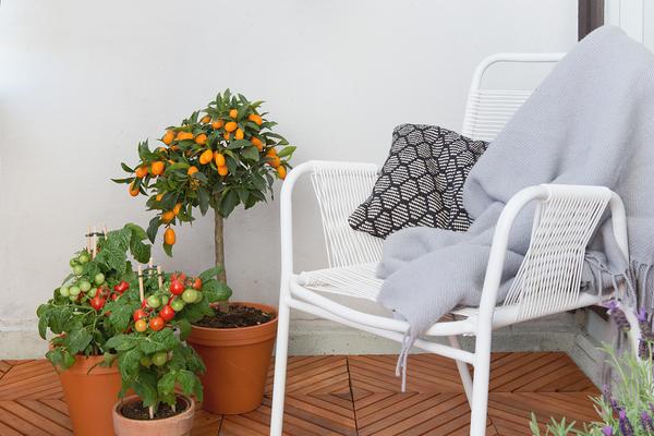 Tomaatit piristävät vuokra-asunnon parveketta | SATO