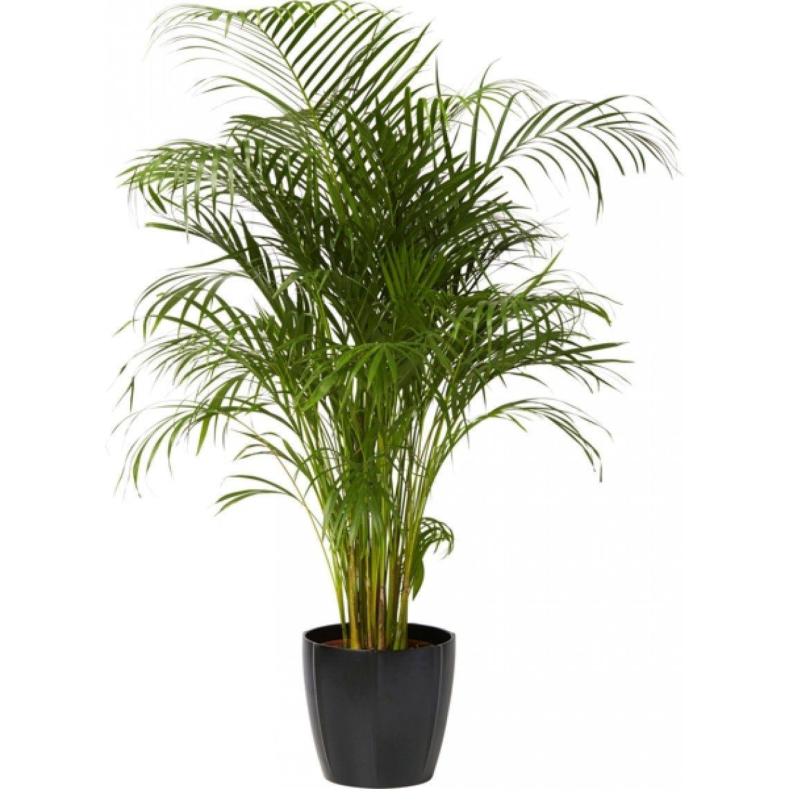 Huoneilmaa puhdistavat viherkasvit  Puustelli Miinus Blogi